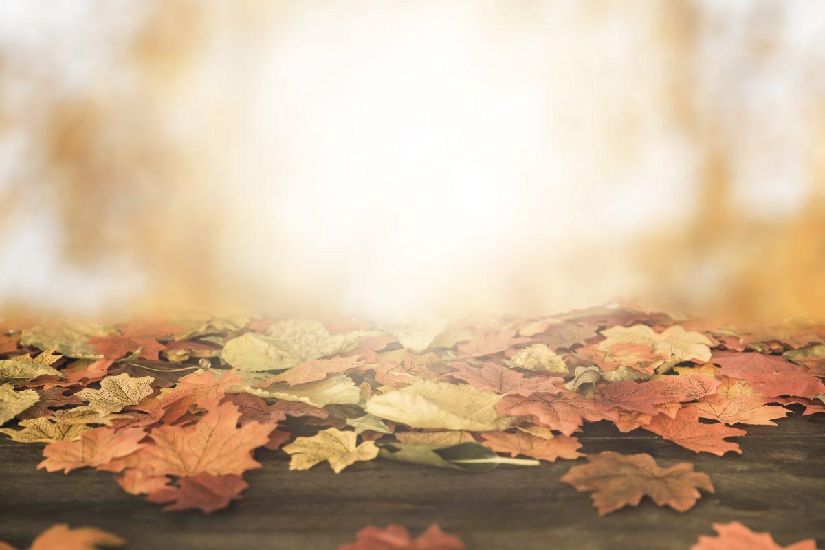 Herbstferien und Erreichbarkeit während der Ferien