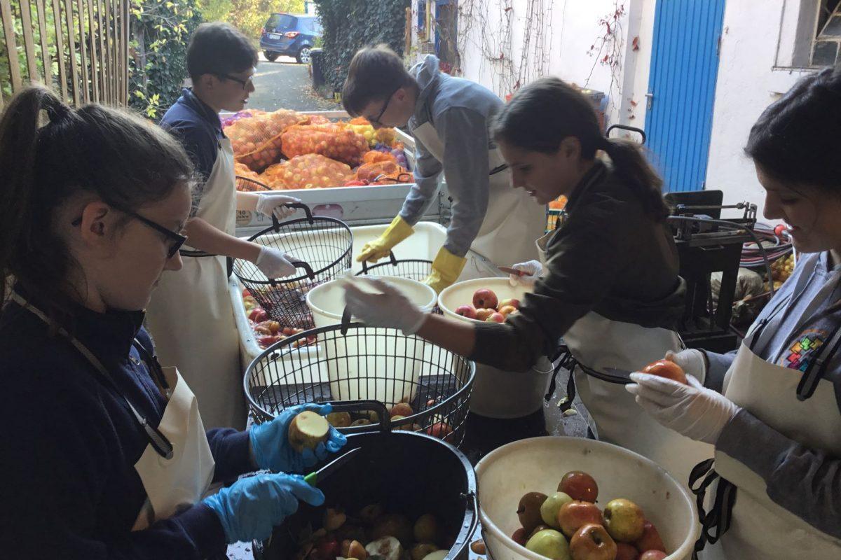 SV hilft dem NABU beim Pressen von Apfelernte