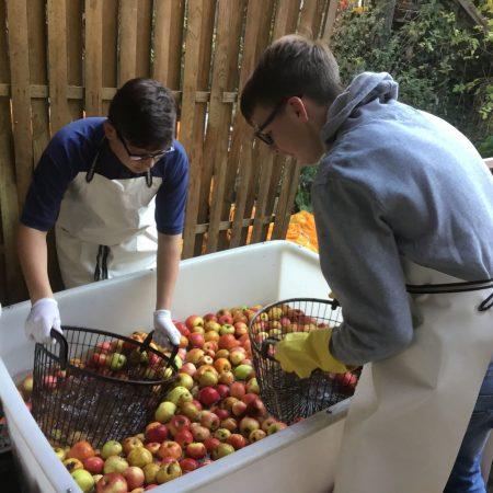 Zuerst müssen die Äpfel gewaschen werden.