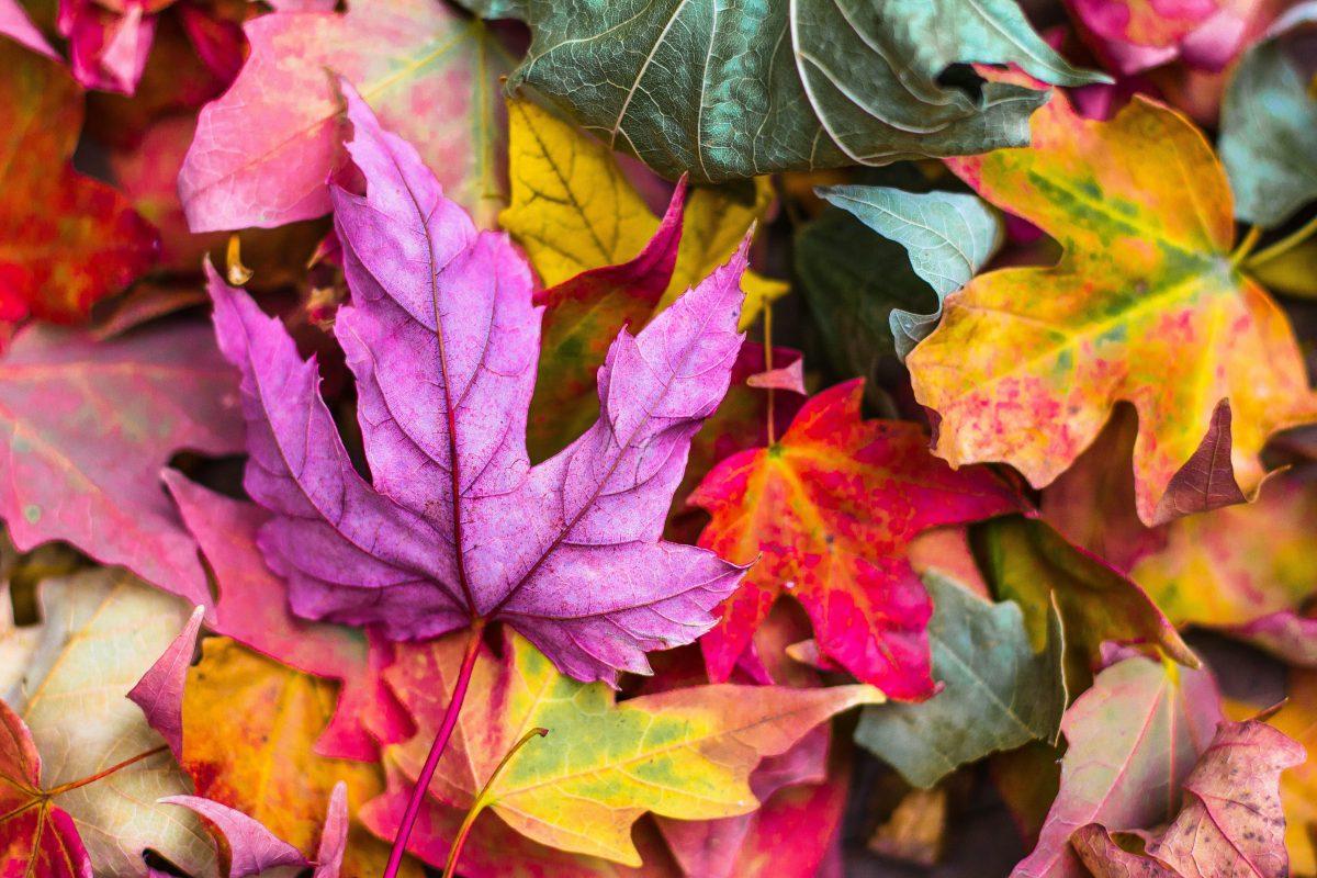 Informationen zu den Herbstferien